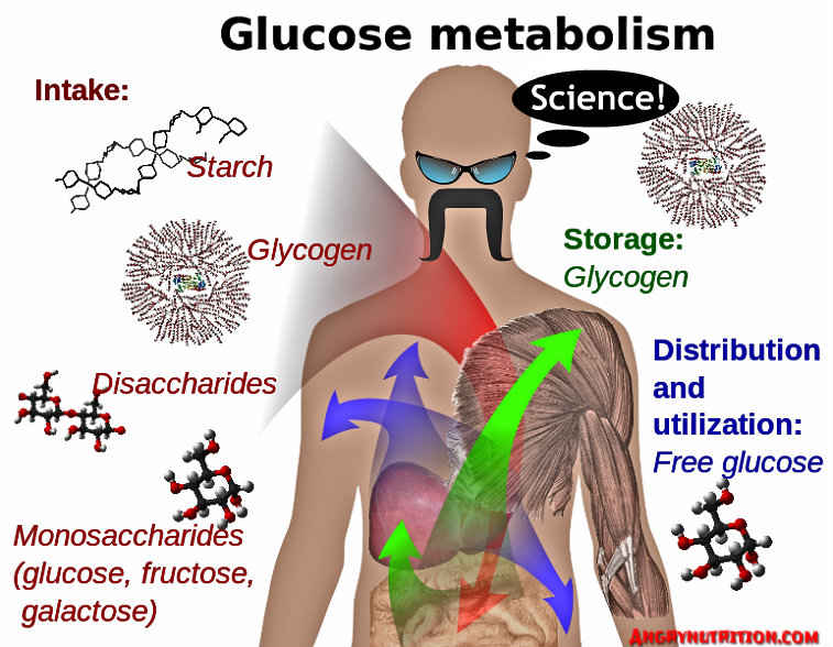 glucose metabolism diagram ketogenic keto